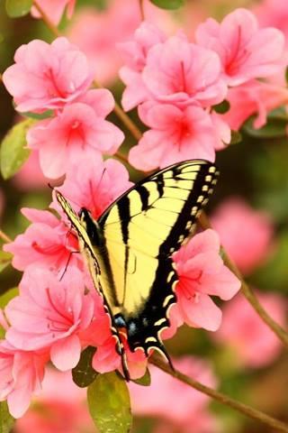 Il fiore e la farfalla 1x10