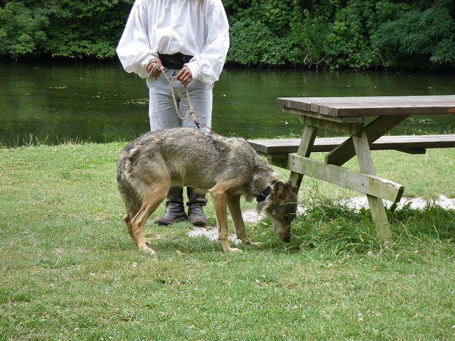 rencontre avec 3 loups Tn_img11