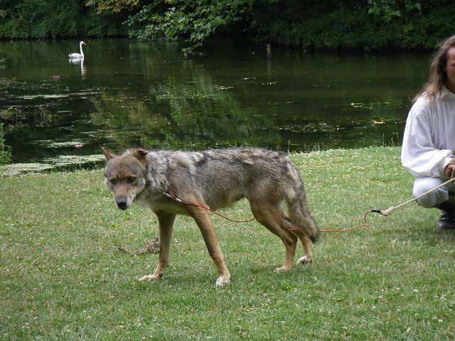 rencontre avec 3 loups Tn_img12