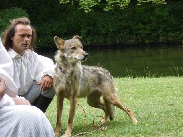 rencontre avec 3 loups Tn_img16