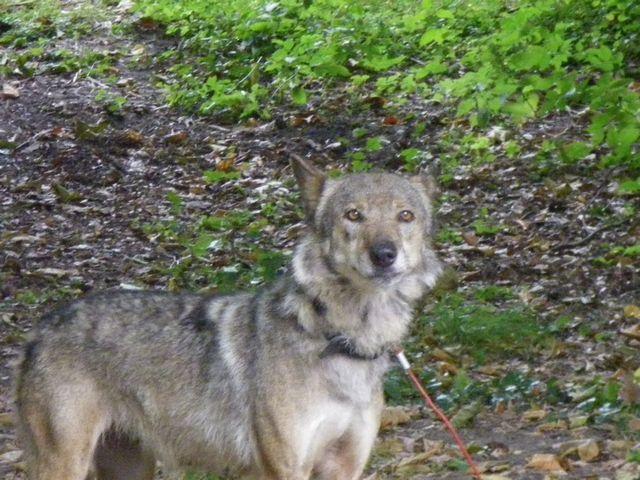 rencontre avec 3 loups Tn_img18