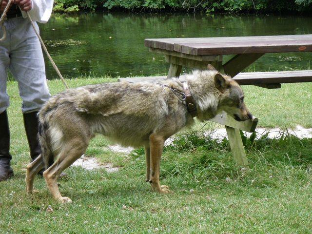rencontre avec 3 loups Tn_img19