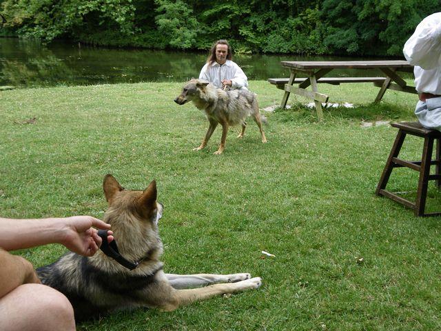 rencontre avec 3 loups Tn_img20