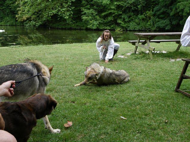 rencontre avec 3 loups Tn_img21