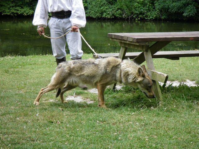 rencontre avec 3 loups Tn_img23