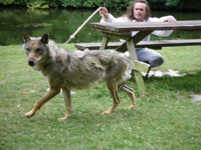 rencontre avec 3 loups Tn_img24