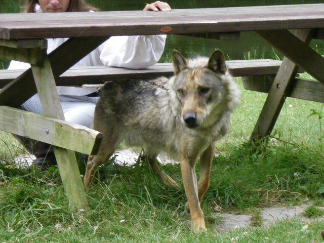 rencontre avec 3 loups Tn_img25