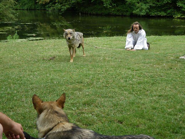 rencontre avec 3 loups Tn_img26