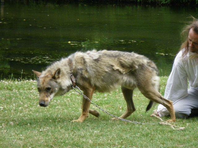 rencontre avec 3 loups Tn_img27