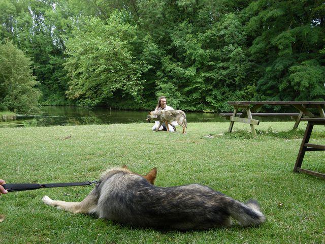 rencontre avec 3 loups Tn_img28