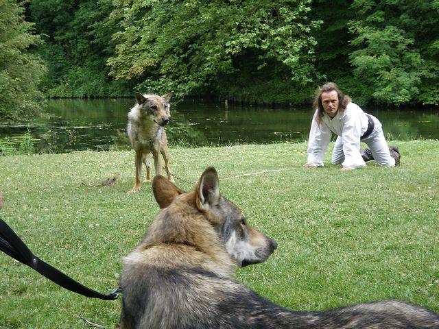 rencontre avec 3 loups Tn_img29