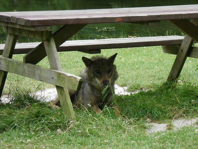 rencontre avec 3 loups Tn_img31