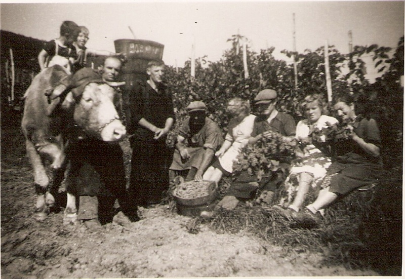 La vie à la campagne autrefois Numar172