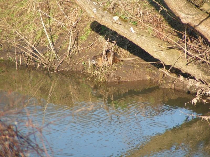 La Mossig , notre rivière Pict0021