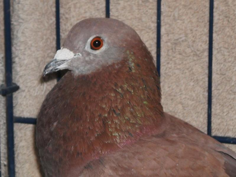 Thin bird, not thriving Red110
