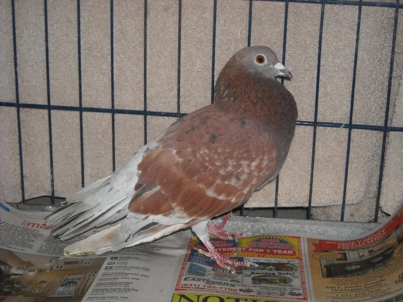 Thin bird, not thriving Red210