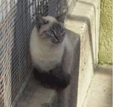 Chats et chatons, fourrière de Niort 79 Chat_s10