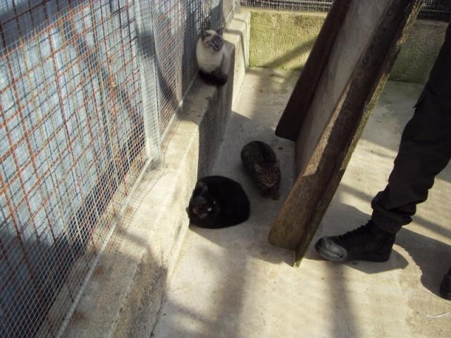 Chats et chatons, fourrière de Niort 79 Sdc10613