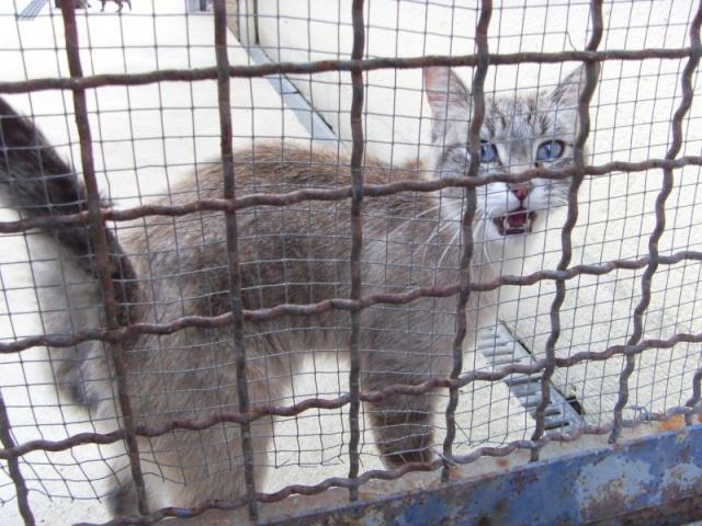 Chats et chatons, fourrière de Niort 79 Sdc10711