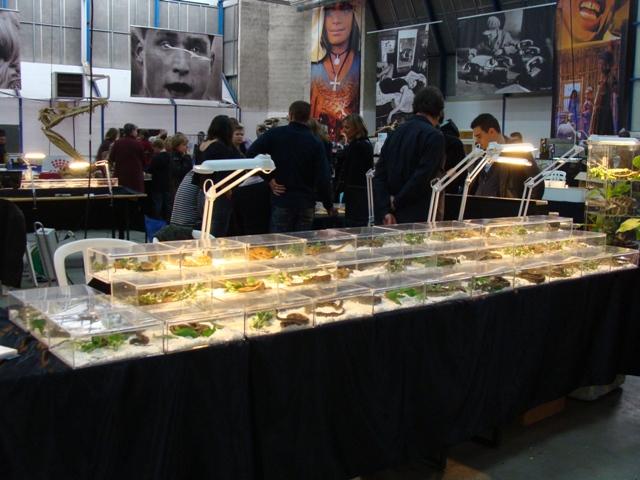 PHOTOS du Salon ANIMALYUS à Lyon !!! 31 oct et 1er nov Dsc04010