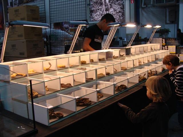PHOTOS du Salon ANIMALYUS à Lyon !!! 31 oct et 1er nov Dsc04011