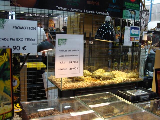 PHOTOS du Salon ANIMALYUS à Lyon !!! 31 oct et 1er nov Dsc04012
