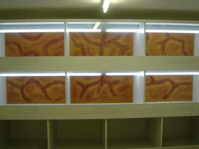 Ma nouvelle salle d'élevage en travaux Dsc09913