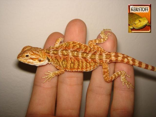 REPTI-DECO présent au salon des animaux de Lyon Ogg1110