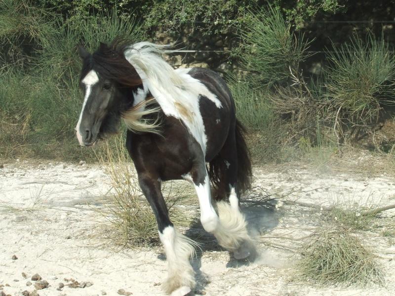 Les chevaux des Anges du Ventoux Dscf0130