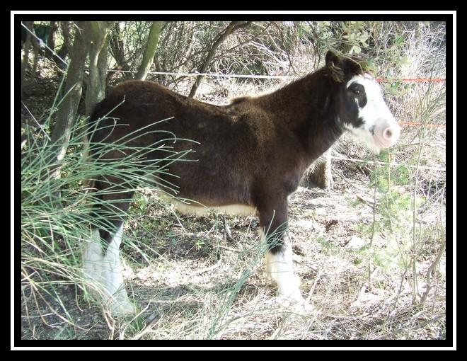Les chevaux des Anges du Ventoux Dscf0832