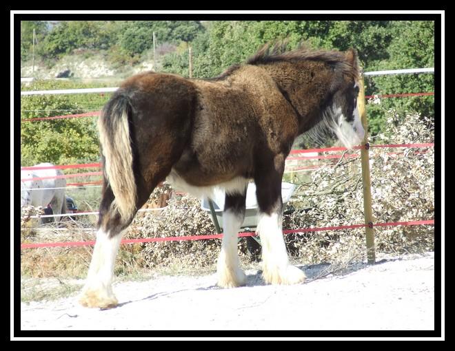Les chevaux des Anges du Ventoux Dscf0833