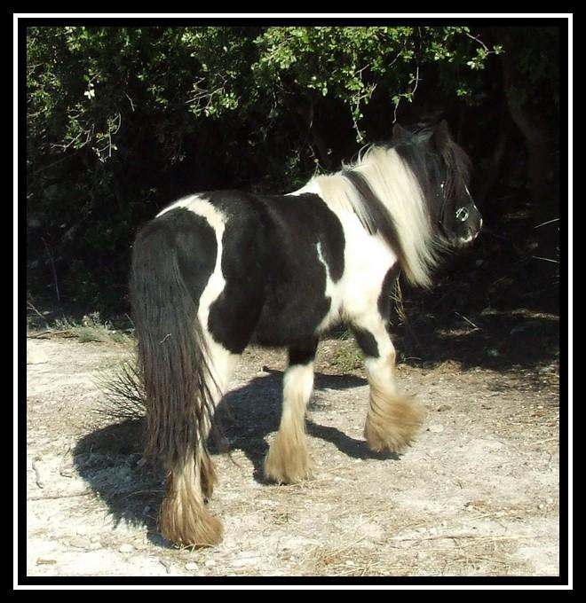 Les chevaux des Anges du Ventoux Dscf0835