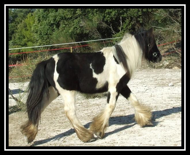 Les chevaux des Anges du Ventoux Dscf0836