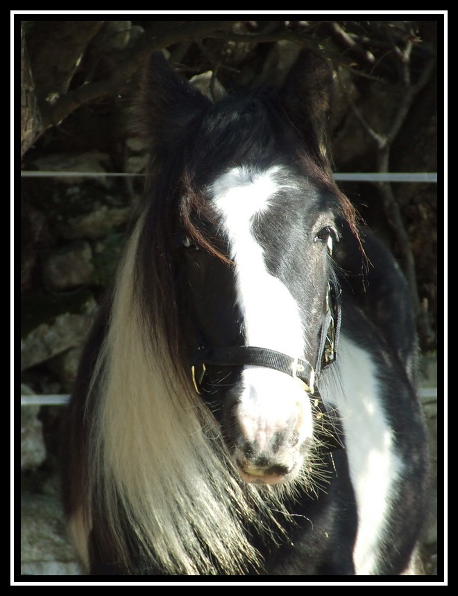 Les chevaux des Anges du Ventoux Dscf0967