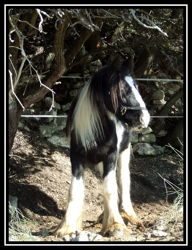 Les chevaux des Anges du Ventoux Dscf0968