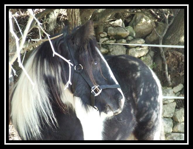 Les chevaux des Anges du Ventoux Dscf0969