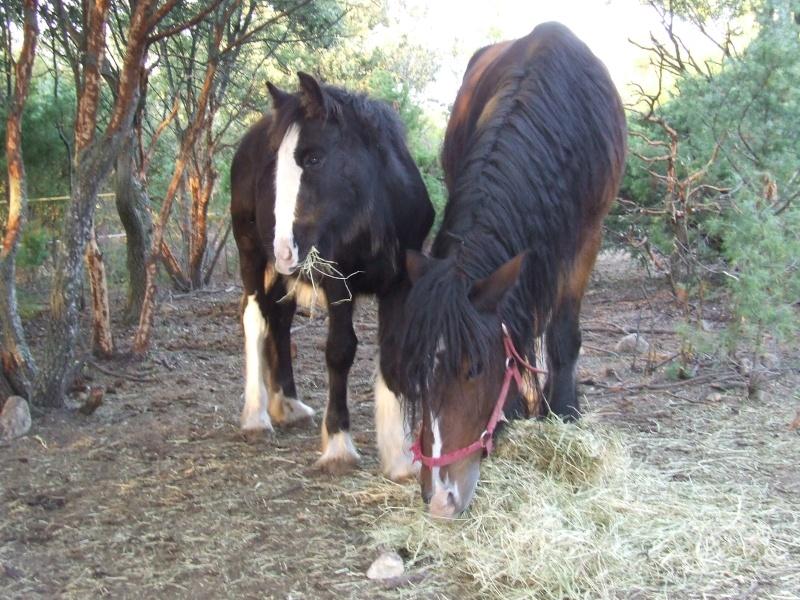 Les chevaux des Anges du Ventoux Dscf1059