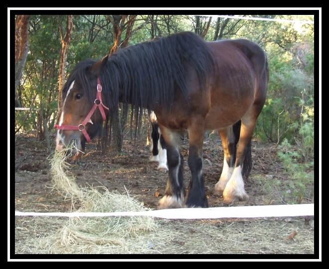 Les chevaux des Anges du Ventoux Dscf1061