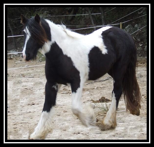 Les chevaux des Anges du Ventoux Dscf1532