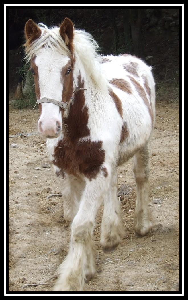 Les chevaux des Anges du Ventoux Dscf1533
