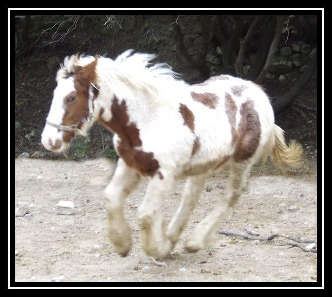 Les chevaux des Anges du Ventoux Dscf1534
