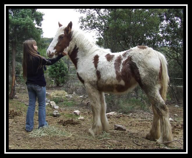 Les chevaux des Anges du Ventoux Dscf1535