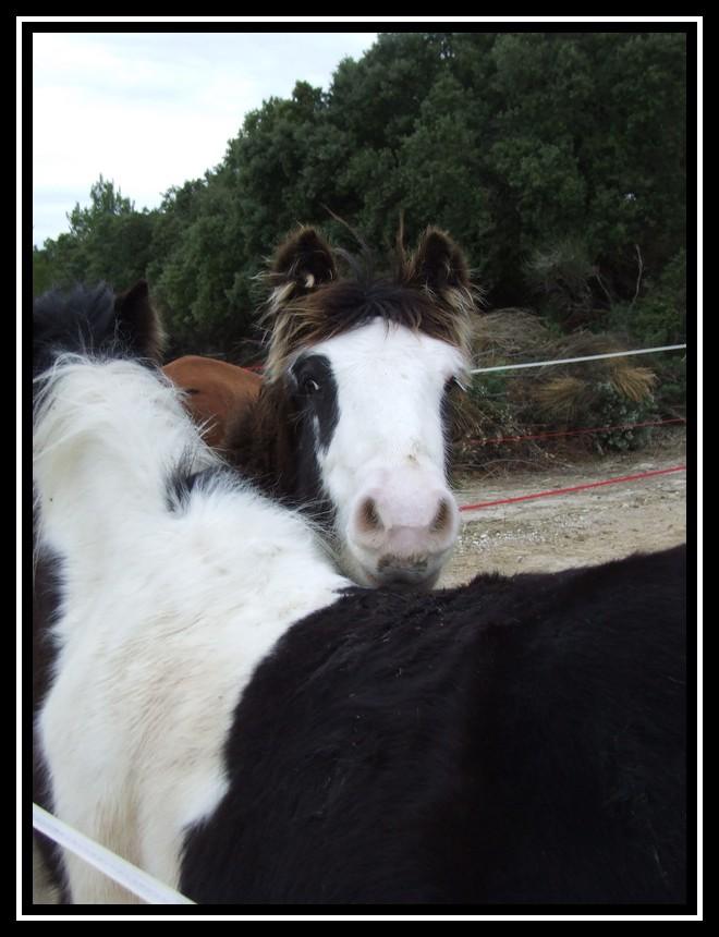 Les chevaux des Anges du Ventoux Dscf1638