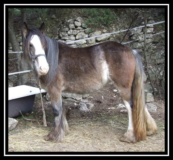 Les chevaux des Anges du Ventoux Dscf1639