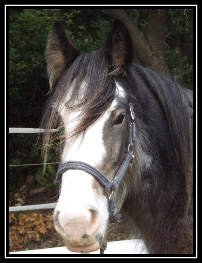 Les chevaux des Anges du Ventoux Dscf1640