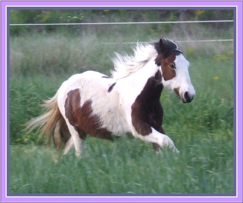 Les chevaux des Anges du Ventoux Dscf2011