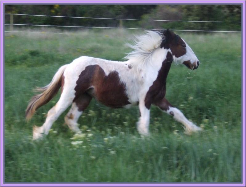 Les chevaux des Anges du Ventoux Dscf2110