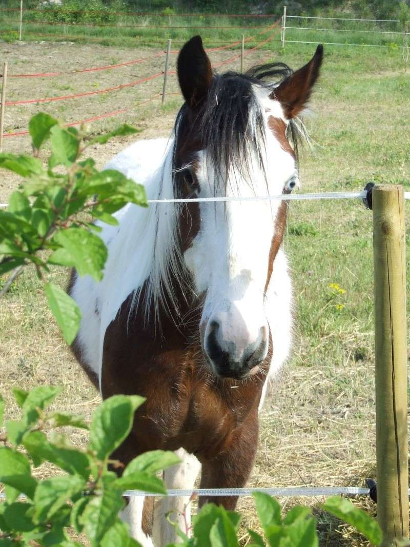 Les chevaux des Anges du Ventoux Dscf3010