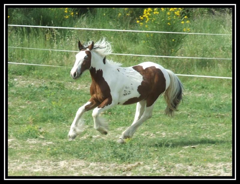 Les chevaux des Anges du Ventoux Dscf3610