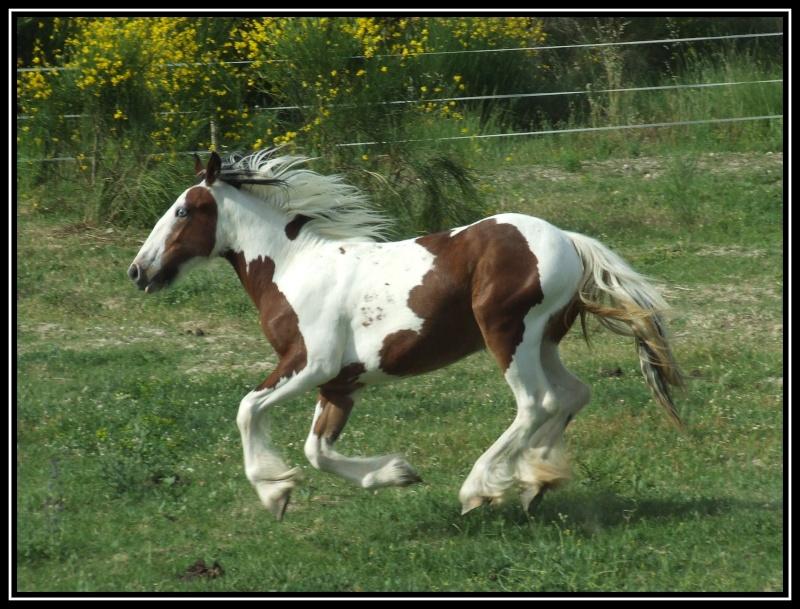 Les chevaux des Anges du Ventoux Dscf3611